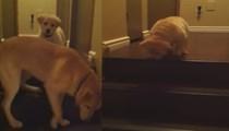 Yavrusuna basamaktan inmeyi öğretiyor!..