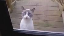 Bir şeyler söylemeye çalışan kedi!