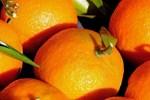 Meyvelerin sihrini keşfedin!..