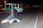 Senegalli öğrenci kazada can verdi!..