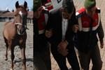Hurda toplamak için yarış atlarını çaldılar!