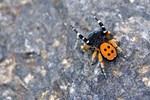 Örümcek zehrinin 'ağrı kesici' etkisi!..