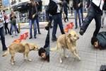 Polisten sokak köpeğine tekme!