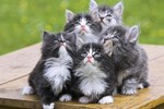 Kedi videoları sağlığa iyi geliyor!..