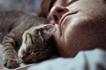 Uyku ihtiyacını düzenleyen gen!