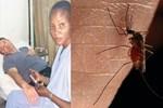 Afrika sineğine bir kurban daha verdik!..