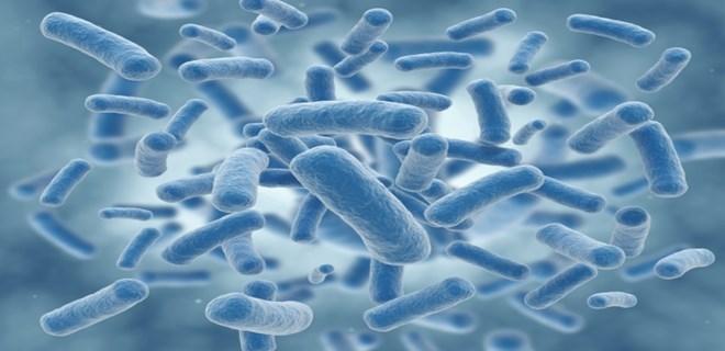 Sağlık pınarı dost bakteriler!