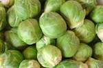 Brüksel lahanası 'alzheimer'ın ilacı