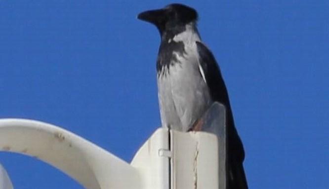 Sakarya'da yeni bir kuş türü görüldü