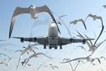 Ulaştırma Bakanlığı'ndan kuş açıklaması