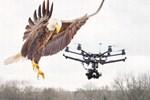 Drone'ları kartal avlayacak!..