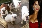 Ebru Şancı lüks villasını köpeklerine bıraktı