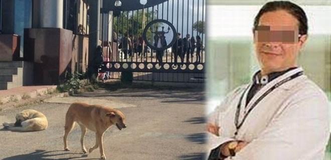 Profesör başıboş köpeği bıçakladı!