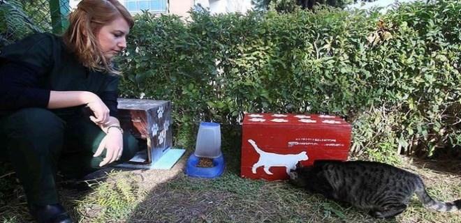 Seçim sandıkları, kedi evi oldu