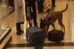 Alman yolculara havalimanında köpekli arama