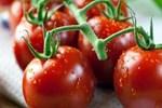 Rusya'ya domates yasağı resmen kalktı!