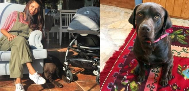Tanem Sivar'ın köpeklerini kim, niçin katletti?