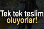 PKK'lı teröristler tek tek teslim oluyor!