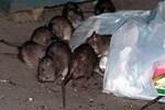 Fransa'da bakanlıklarda fare istilası!