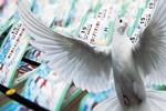 Talih kuşu ile hayaller bile güzel!