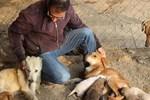 Dişi köpeklerin merhameti şaşırttı!