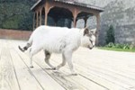 Hasta kedi belediyeye sığındı!