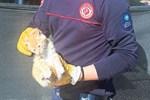 Kedi Brad'i itfaiye kurtardı