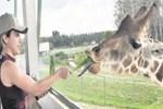 Sarıoğlu zürafayı elleriyle besledi