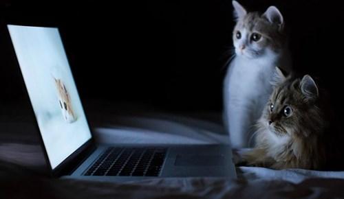 Anılarla ilgili bellek kedilerde de var