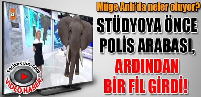 Müge Anlı'da stüdyoya önce polis arabası, ardından bir fil girdi!