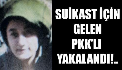 Suikast için gelen PKK'lı yakalandı!