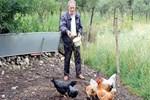 Tavukları komşu bahçeye girdi 250 TL ceza yedi!