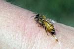 Balıkesir'de öldüren arı!..