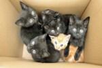 6 yavru kedi için 10 yıl hapis istemi!