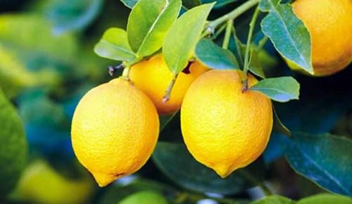 Limon suyu bel ağrısını azaltıyor