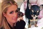Paris Hilton'un önlenemeyen tutkusu!