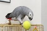 Cinayeti papağan çözdü!