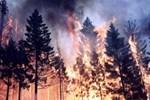 Meteorolojiden 'orman yangını' uyarısı!
