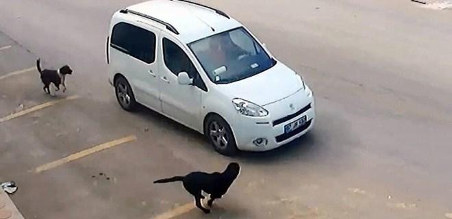 Antalya'da köpeği ezen araç sürücüsünün ehliyetine el konuldu