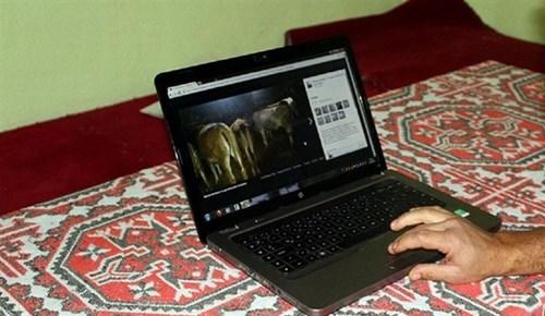 İnternet üzerinden kurbanlık alırken 'kurban' olmayın!
