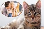 Kedi videoları 2 milyarlık ekonomi doğurdu!