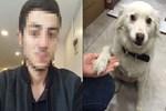 Köpeğe tekme atan insan müsveddesi gözaltında!