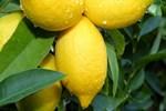 Limonun 'mucizevi etkilerini' keşfedin!