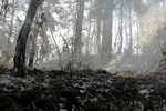 Bolu'da 80 hektar kül oldu!
