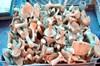 Sağlık Bakanlığından doğada yetişen mantarların tüketiminin artmasına bağlı zehirlenme vakalarına...