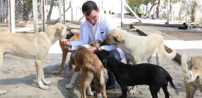 Hayvanseverler büyükşehirin barınaklarında buluşuyor