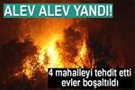 Manavgat'ta orman yangını!