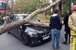 Ağaç seyir halindeki aracın üzerine devrildi!