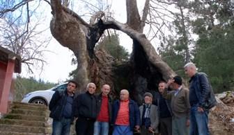 Bu ağacın yaşını duyanlar şok geçiriyor!