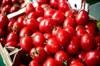 Domates, biber, patlıcan, hıyar ve kavunda tohumluk üretimi yapılacak. 50 ilaç daha yerlileşme...